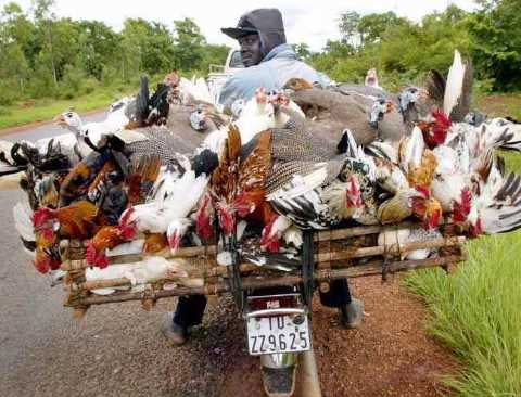 poultrytransporter01